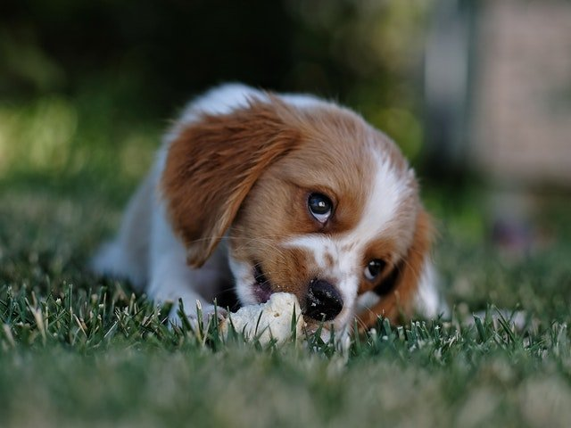 why do dogs bite their paws