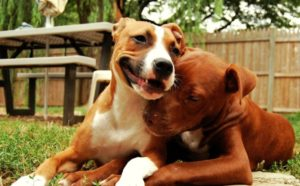 This Realtor has made it her mission to help families with Pitbulls find a new place to live!