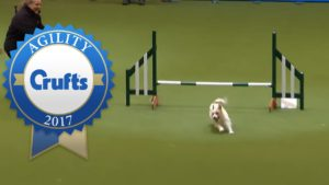 The Happiest Rescue Dog On The Agility Course