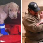 Pitbull Puppy Is Rescued, Treated For Mange And Shows Endless Appreciation Towards His Rescuer!