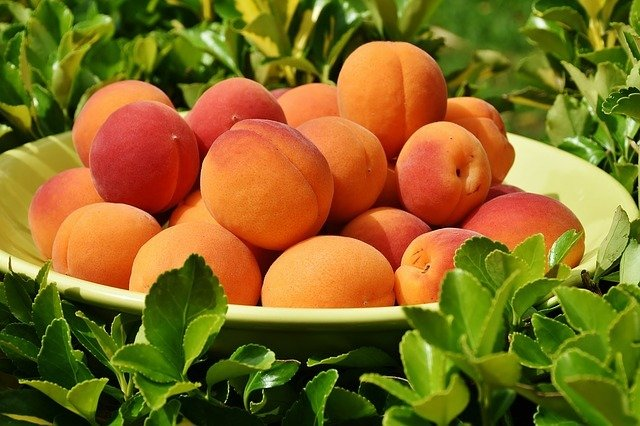 Can Dogs Eat Apricot
