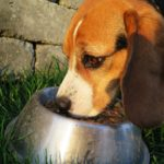 The Best Low-Fat Dog Foods Available in the Market
