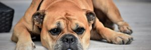 5 Terrifying Signs Your Pet Needs A Heartworm Test