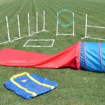 Affordable Dog Agility Course
