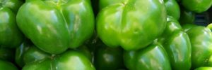 Can Dogs Eat Green Peppers?