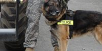 Popular Police Dog Breeds