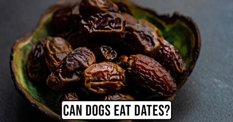 can dogs eat dates featured