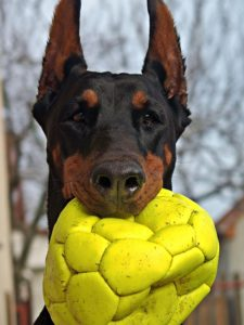 Why Do Dogs like Balls