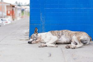 What is Parvo? And Why Should Every Dog Owner Be Aware of It?