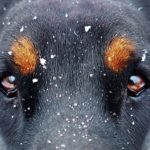 Why Do Most Dogs Have Brown Eyes