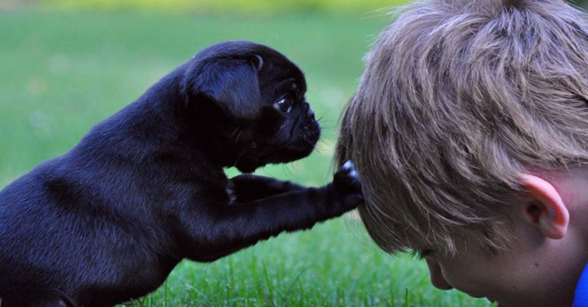 are pugs good family pets
