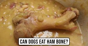 Can a Dog Eat a Ham Bone?