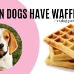 Can Dogs Eat Waffles
