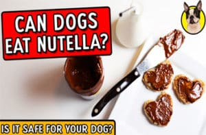 Can Dogs Eat Nutella