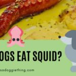 Dogs and Seafood: Can Dogs Eat Squid?