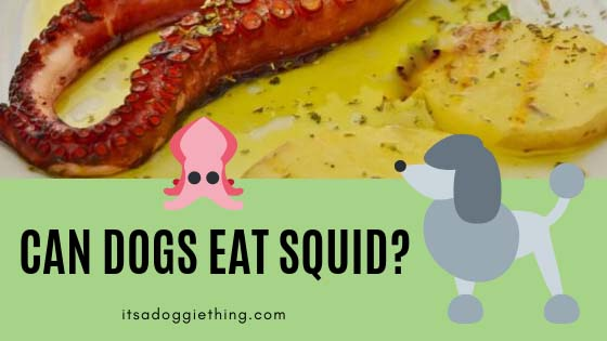 can dogs eat squid