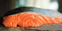 Feeding Salmon to Your Dog