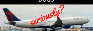 """Pitbulls"" Banned On Delta? – Are You Serious Bro?"