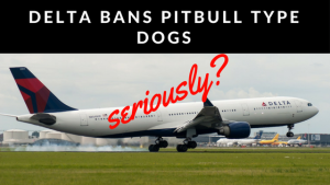 """""""Pitbulls"""" Banned On Delta? – Are You Serious Bro?"""