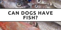 Can Dogs Have Fish