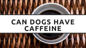 Can Dogs Have Caffeine or Is it Unsafe?