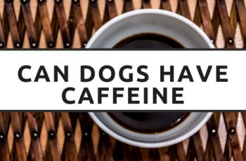 can dogs have caffeine