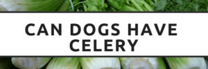 """""""Can Dogs Eat?…"""" – Celery"""