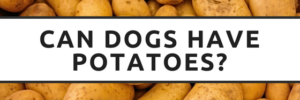 Can Dogs Have Raw Potatoes