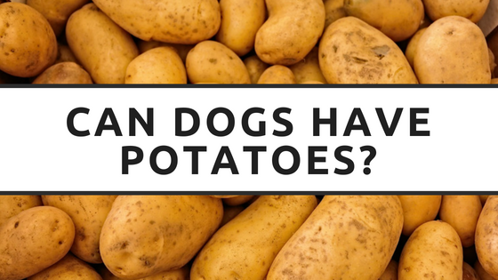 can dogs have potatoes