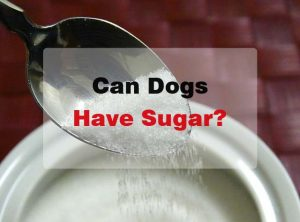 Can Dogs Have Sugar? Or Does It Have Health Effects