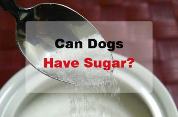 can dogs have sugar