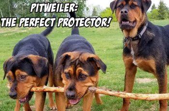 pittweiler