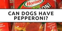 Can Dogs Have Pepperoni