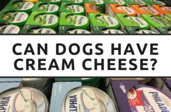 can dogs have cream cheese