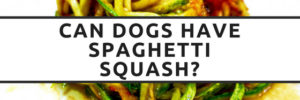 Can Dogs Eat Spaghetti Squash