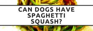 Can Dogs Eat Spaghetti Squash