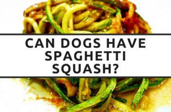 can dogs have spaghetti squash