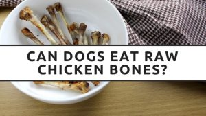 Can Dogs Eat Raw Chicken Bones