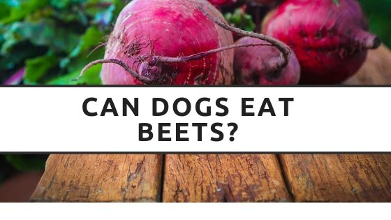 Can Dog Eat Beets