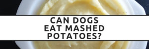 Can Dogs Eat Mashed Potatoes