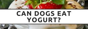 Can I Give My Dogs Yogurt?