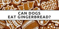 Can Dogs Eat Gingerbread?