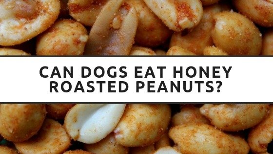 Can Dogs Eat Honey Roasted Peanuts