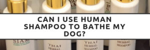Can I Use Human Shampoo To Bathe My Dog
