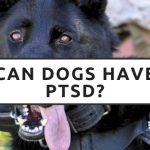 Can Dogs Have PTSD?