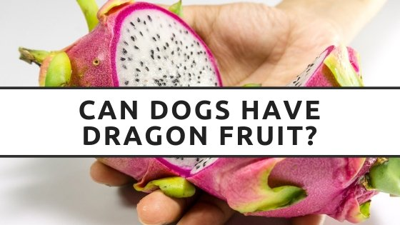 Can Dogs Have Dragon Fruit