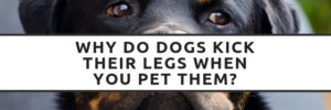 Why Do Dogs Kick Their Legs When You Pet Them