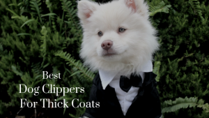 Dog Clippers Our Top 5 Picks: The Best Dog Clippers for Thick Coats
