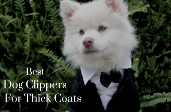 best dog clippers for thick coats
