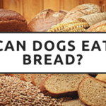 Can Dogs Eat Bread? Bread: A Bummer for Dogs